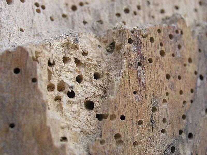 Come eliminare il tarli dal legno